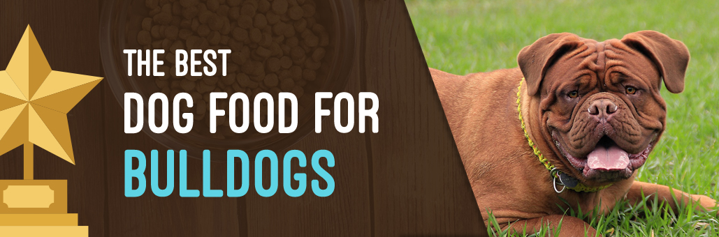 Best-Dog-Food-for-Bulldogs