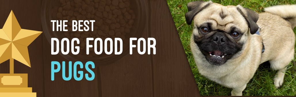 Best-Dog-Food-for-Pugs