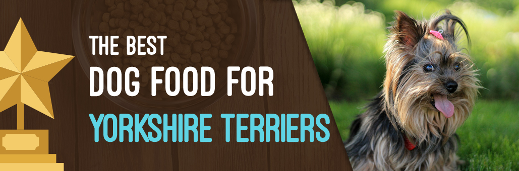 Best-Dog-Food-for-Yorkshire-Terriers