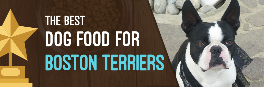 Best-Dog-Food-for-Boston-Terriers