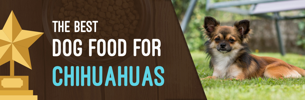 Best-Dog-Food-for-Chihuahua