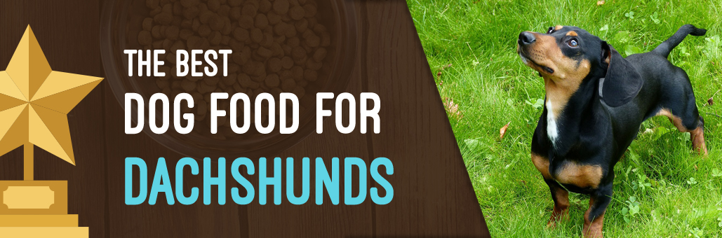 Best-Dog-Food-for-Dachshund
