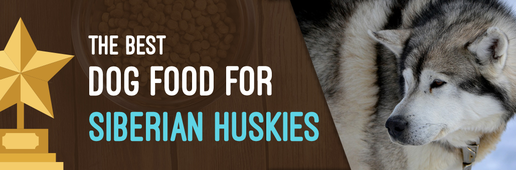 Best-Dog-Food-for-Siberian-Huskies